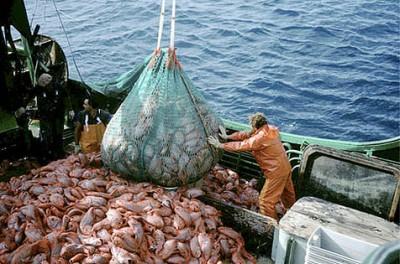 pesca_industrial