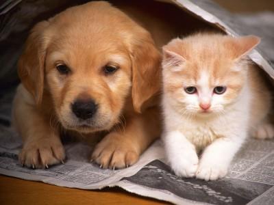 cao-vs-gato