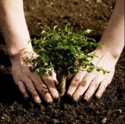 plantar-arvores-e-essencial-para-restaurar-ecossistemas-florestais-3